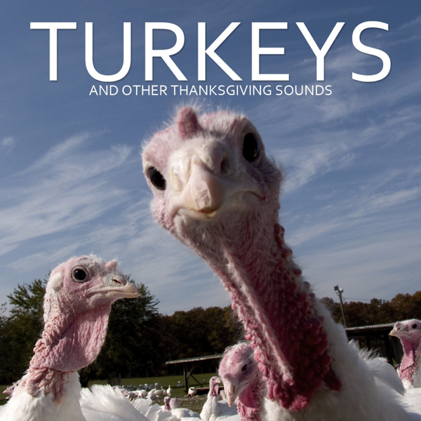 turkeys and other thanksgiving sounds by pro sound effects library on apple music