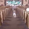 (Sandy) Alex G - Trick Album