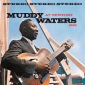 Muddy Waters - (I'm Your) Hoochie Coochie Man
