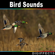 Digiffects Sound Effects Library - Pigeon Bird Flapping Wings Version 3