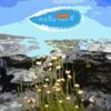 바위 틈에 자라난 꽃 - Single ジャケット写真