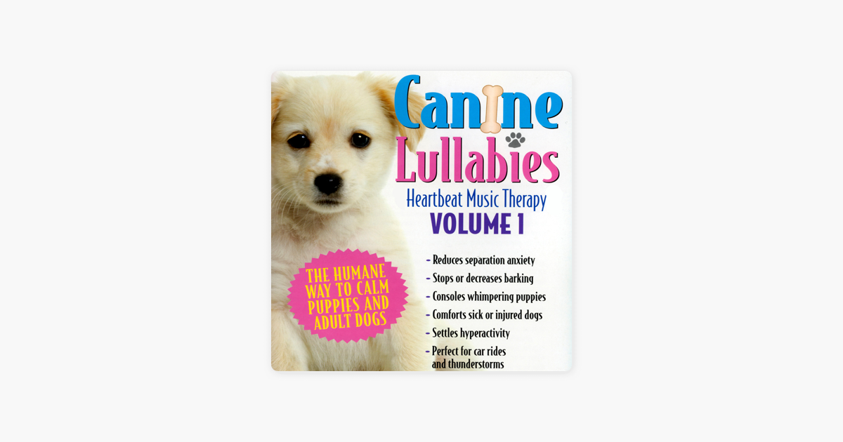 Terry Woodford music biz veteran & creator of Canine Lullabies