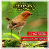 Fågelsång i gryningen: ljud av naturen