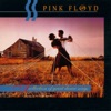 A Collection of Great Dance Songs, Pink Floyd
