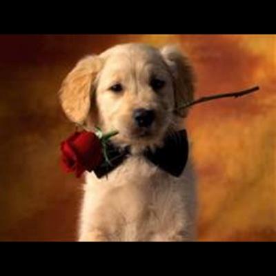 Eres el Amor de Mi Vida - Single - Kenneth L. King album