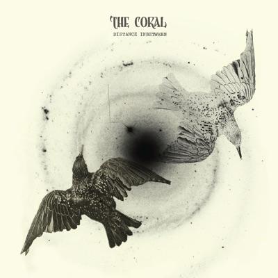 Distance Inbetween - The Coral