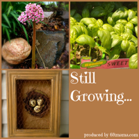 Still Growing...A Weekly Gardening Podcast podcast