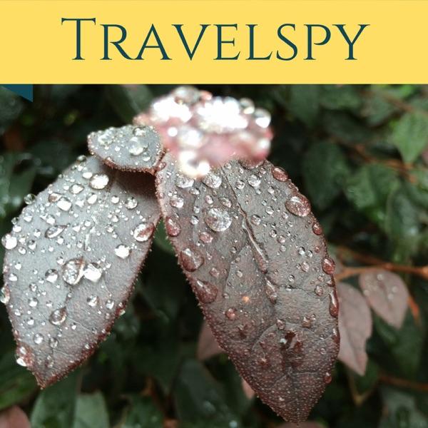 Travelspy - travelspy