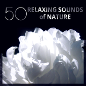 50 Relaxing Sounds of Nature: Peaceful Music for Spa Treatments, Asian Yoga Meditation, Massage & Stress Release