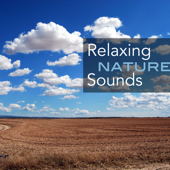 Relaxing Nature Sounds - Music with Sounds of Forest Stream, Rain, Ocean Waves, Meadow Ambience