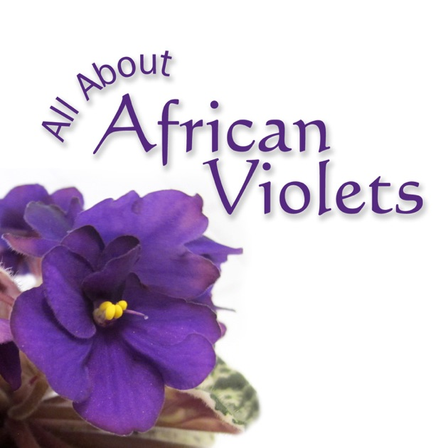 All About African Violets by Adrienne