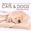 Music for Cats and Dogs Calming Music for your Pets