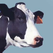 Dairy and Animal Science - Podcasts