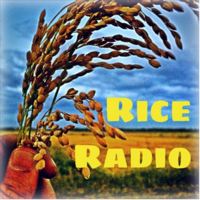 Rice Radio podcast