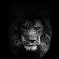 Bold As A Lion Ministries podcast