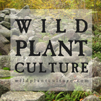 Wild Plant Culture podcast