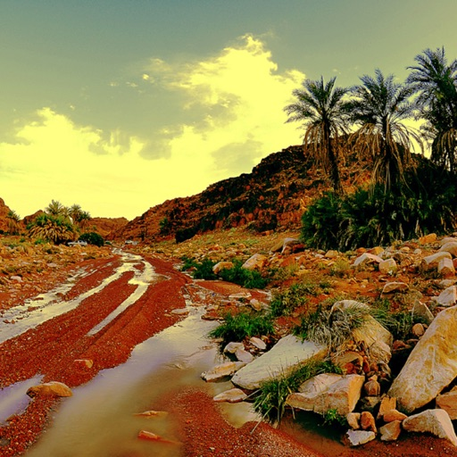 Cover image of شيلات