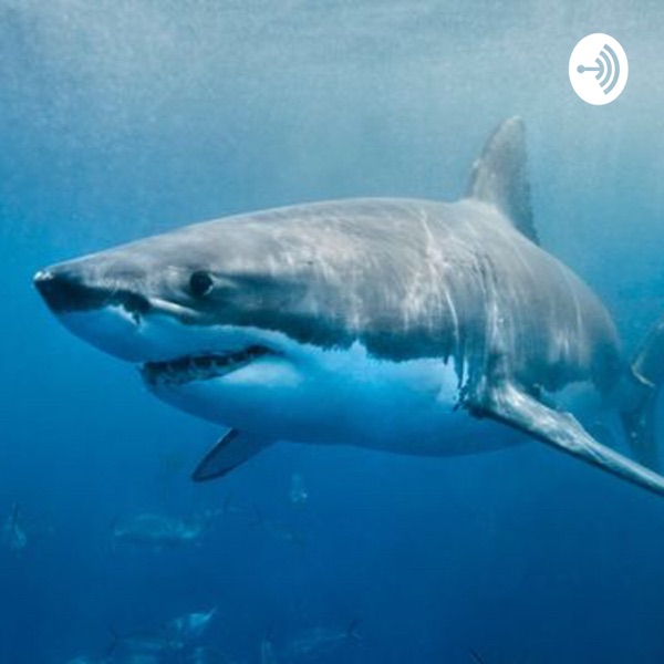 Shark podcast