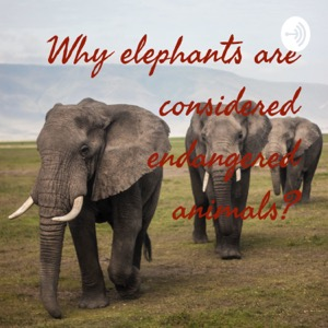 Why elephants are considered endangered animals?