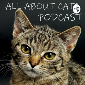 All About Cats Podcast
