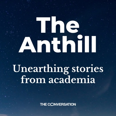 The Anthill:The Conversation