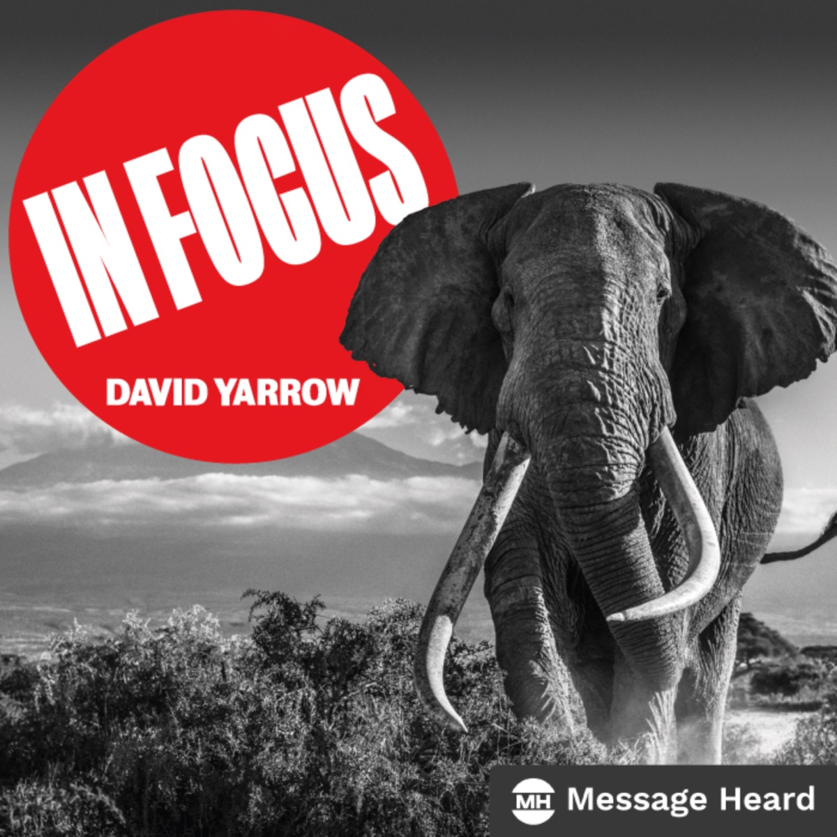 In Focus with David Yarrow