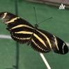 Chasing Butterflies artwork