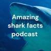 Amazing shark facts podcast  artwork