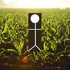 Tanning In A Corn Field artwork