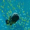 Fish: The Worst Pet artwork