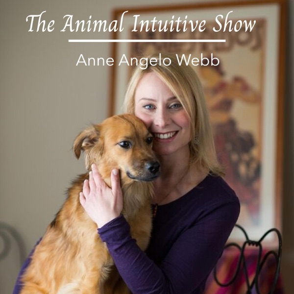 The Animal Intuitive Show Artwork