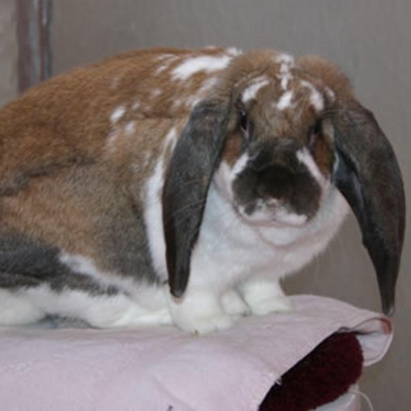My Rabbit Grace Podcast