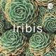iribis