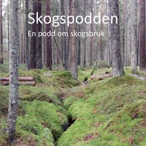 Skogspodden