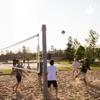 Volleyball artwork