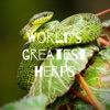 World's greatest herps artwork