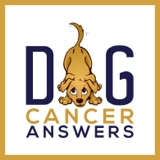 How Type C for Comfort Treats Dog Cancer | Molly Jacobson Deep Dive
