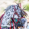 Wild Horses Thunder - The Journal artwork