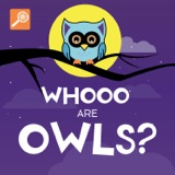 Whooo Are Owls?