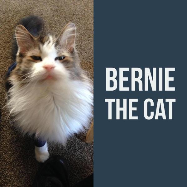Bernie The Cat