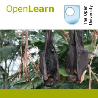 Studying mammals: life in the trees - for iBooks