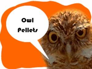 Owl Pellets: Tips for Ag Teachers