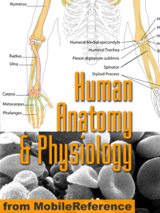 Human Anatomy and Physiology Study Guide Summary