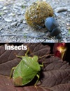 Quiz Insects