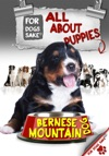 All About Bernese Mountain Dog Puppies