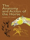 The Anatomy And Action Of The Horse