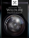A Guide To Wildlife Photography