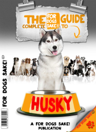 All About Huskys