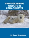 Photographing Wildlife In Cold Climates