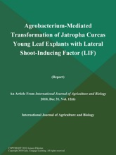 Agrobacterium-Mediated Transformation Of Jatropha Curcas Young Leaf Explants With Lateral Shoot-Inducing Factor (Lif) (Report)